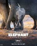 Elephant FRENCH WEBRIP
