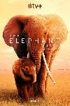 The Elephant Queen FRENCH WEBRIP